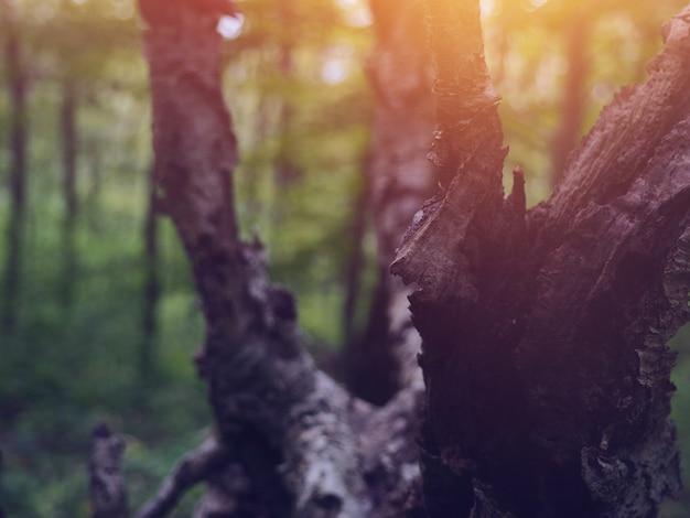 Wood bark substrate natural texture