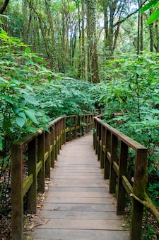 Wood bridge in the forest at kew mae pan nature trail, chiang mai, thailand