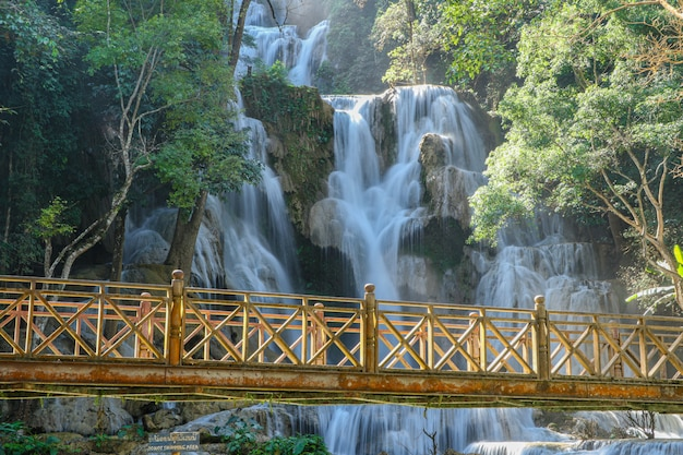 Wood bridge tat kuang si waterfall in laos.