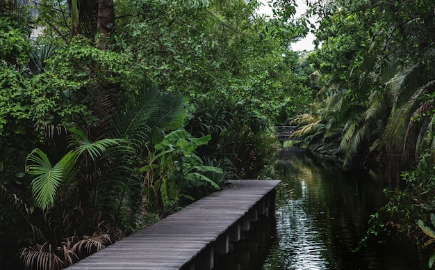 Деревянный мост аллея на пруд в джунглях