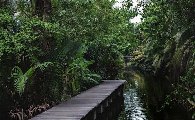 Wood bridge walkway on water pond in jungle