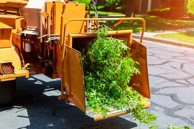 Wood chipper blowing tree branches cut