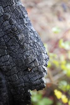 Древесный уголь подробно сгорел лес после пожара