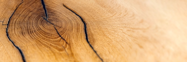 Wood cutting. felled old oak stump. wooden background. sectional top view as background. copy space