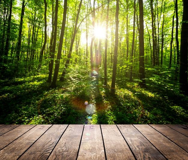 春の森の表面の木の床
