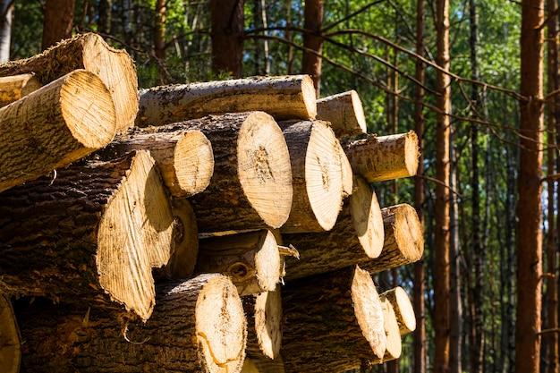 森の中の木