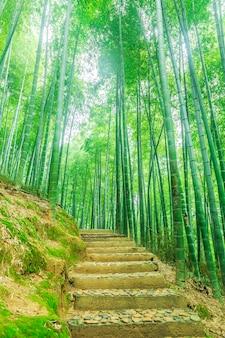 Деревянный лист зеленый яркий бамбук