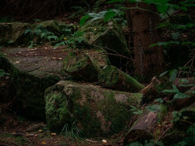 森の中の木の隣の石の上に木があります