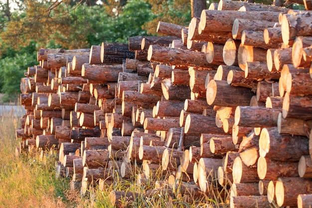 소나무 숲에서 추출한 목재 통나무가 더미 위에 놓여 있습니다.