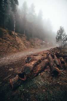 Wood onthe road in a forest