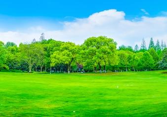 木製の屋外スペース緑色の水の森の景色