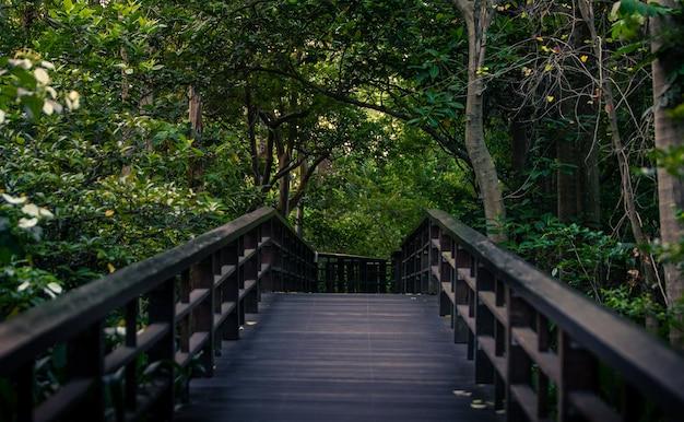 台北公園の森の木々の風景にある木の小道。台湾の園芸植物。アジアの森の歩道のシーンの背景。