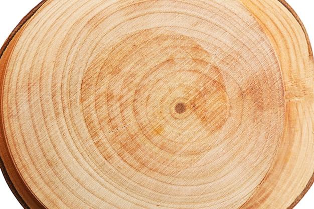 木の丸いスライス、マクロ