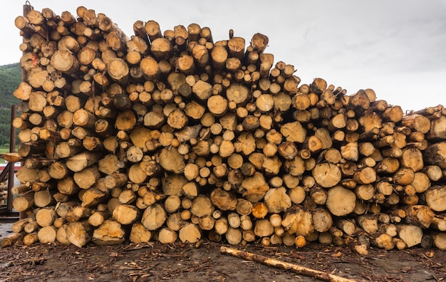 Wood of round timber stacked in a pile at the sawmill