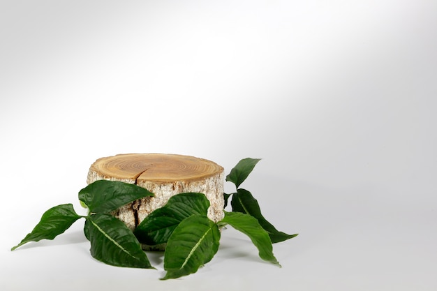 Wood slice podium with leaves