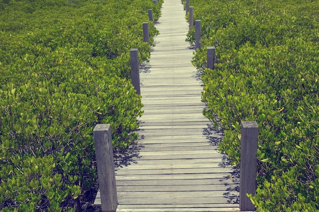Wood small bridge on the forest mangrove vanishing point perspective