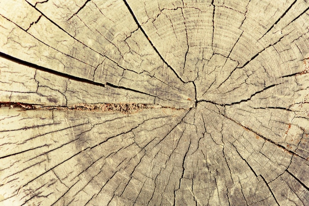 Wood structure, abstract background. dry old tree with cracks. wooden cross section showing growth rings.
