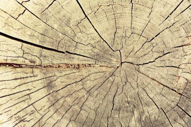 木構造、抽象的な背景。ひびの入った古い木を乾燥させます。年輪を示す木製の断面図。