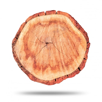 Wood stump or wooden log isolated on pure white