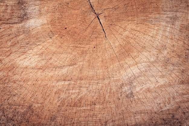 Wood stumps texture with pattern background