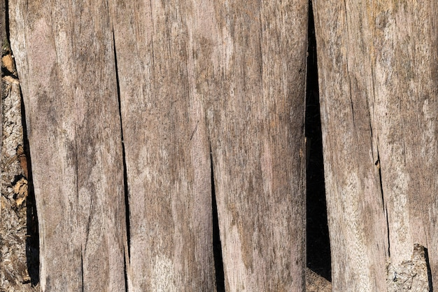 Wood surface with its structure, details and features of wood