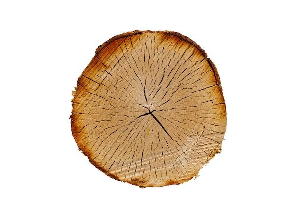 나무 질감입니다. 균열이 있는 자작나무 줄기. 라운드 컷 트리 흰색 배경에 고립입니다. 고품질 사진