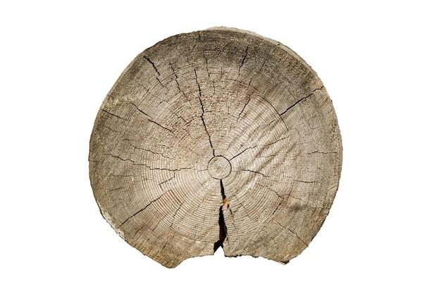 木の質感。ひびの入った白樺の幹。白い背景で隔離の丸いカットツリー。高品質の写真