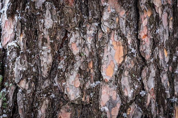 木の質感。茶色の松の木の背景をクローズアップ。大人の松の樹皮の表面の詳細
