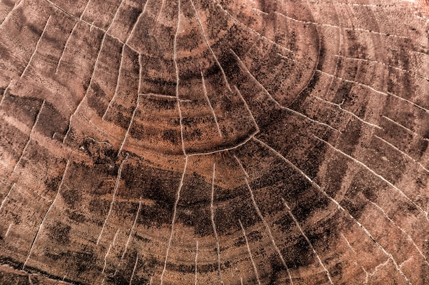 Wood texture cut tree trunk background