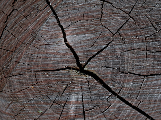 Wood texture of cut tree trunk, tree-rings, close-up background texture