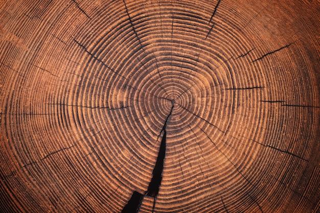 Текстура древесины старого пня