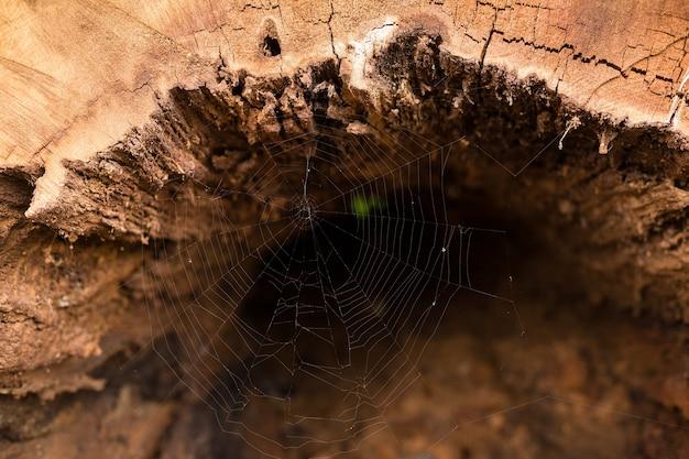 内部と背景の古い木の幹の木の質感