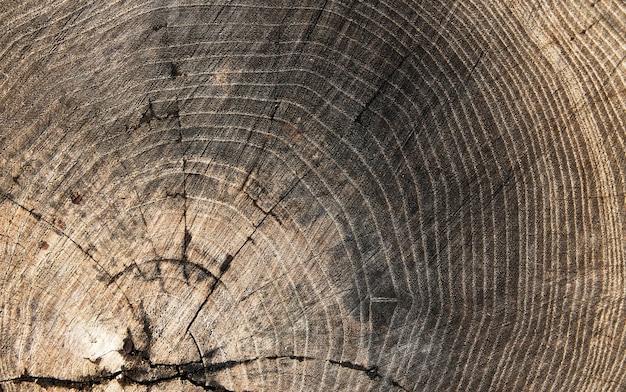 木の質感の切り株の背景年齢