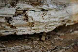 Wood texture, weathered, texture