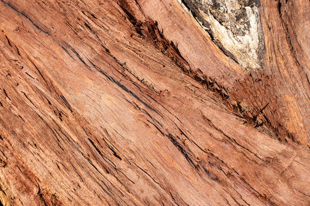 Wood texture with grains