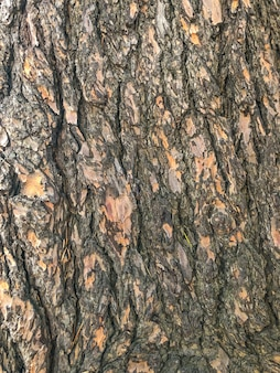 Wood texture, wood in sochi increased view of the bark.