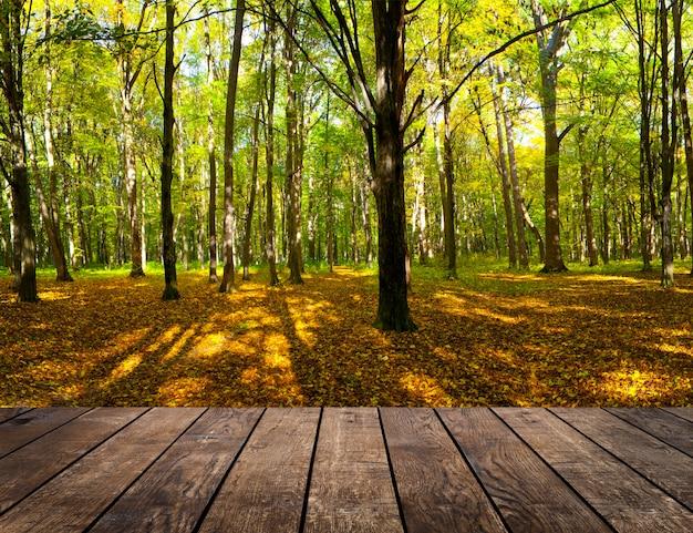 숲 배경에 방 인테리어에 나무 질감 배경
