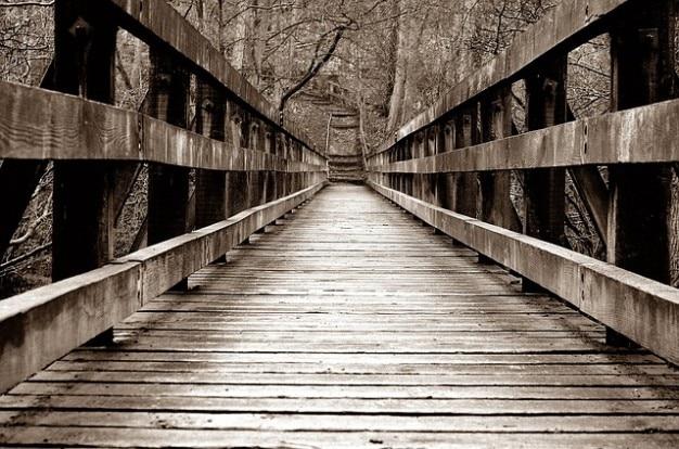 Wood transition architecture forest bridge