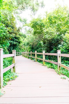 Wood walkway at seaseom park in jeju island