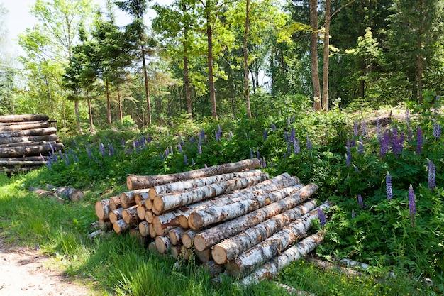 樹皮と損傷のある木材