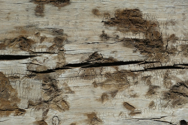 Wood with mold stains