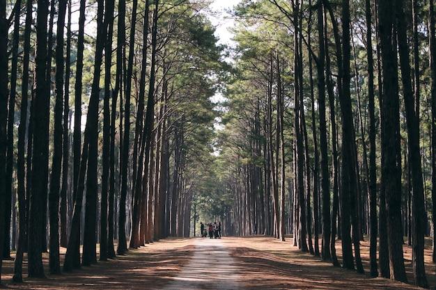 나뭇 가지를 조명하는 숲 바닥에 나무를 통해 쏟아져 태양 광선으로 일몰 전에 황금 햇빛에 의해 숲 속된 숲 나무 백라이트. 빈티지 효과 스타일 사진.