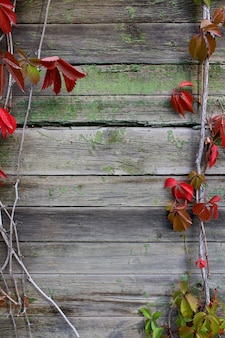 Wooden background autumn grapes