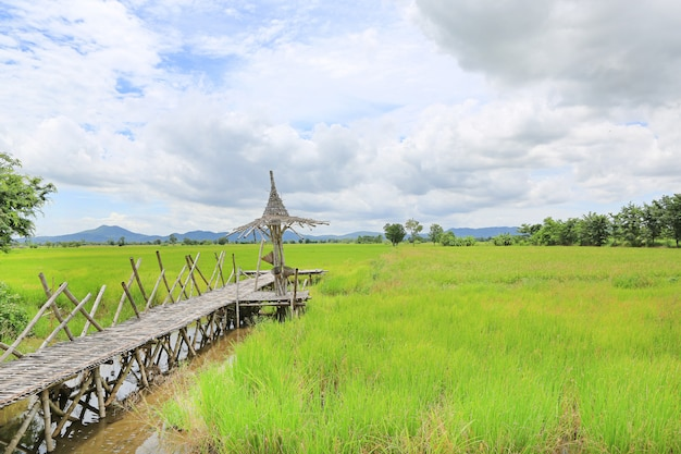 Wooden bamboo walkway with fresh green paddy field and mountain background.