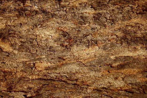 Wooden bark texture background