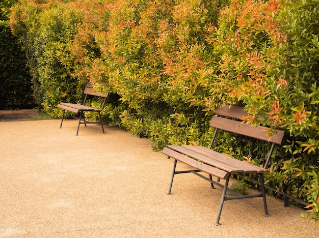 Wooden bench and autumn green and brown leaves wall background