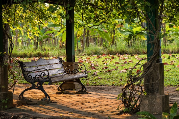 Wooden bench chair in park at sunset
