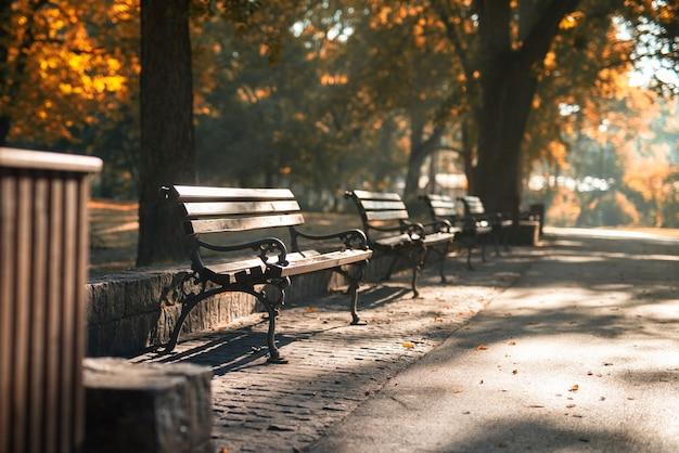 Деревянная скамейка в городском парке.