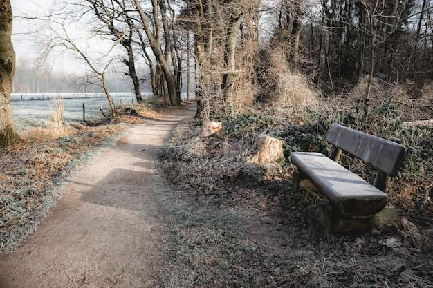 森の小道の近くの木製のベンチ