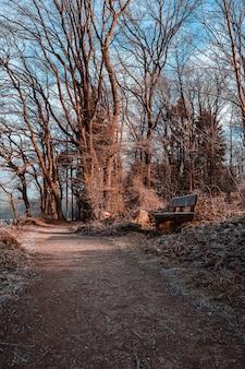 Panca in legno su un sentiero circondato da foglie secche ed erba sotto la luce del sole in un parco